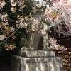 【宣言】〜桜の季節に〜の画像