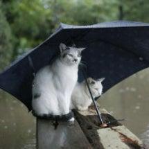 雨の日の猫ちゃんの隠…