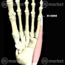 重要な筋肉 ~小趾外転筋~の記事に添付されている画像