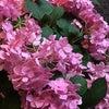 「夏至」の日の画像