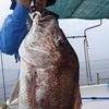 デカ真鯛来ました。の画像