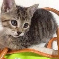 保護猫日記その(35)✨ママキャット&ベイビーズ✨その後✨作戦は失敗でした…そのの記事に添付されている画像