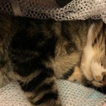 儚い日~我が家の愛猫…