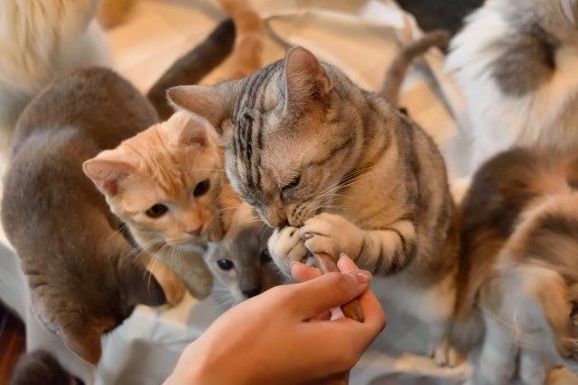 猫 好き な 食べ物