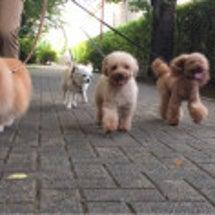 犬の言葉学習中_φ(…