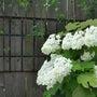 紫陽花の花環飾り