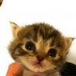 子猫のピーナッツちゃ…
