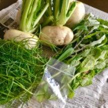 新鮮お野菜にはパワー…