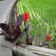 6月の花たち(3)