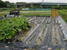 170626ウッチー式・今日の農作業の出来栄え07