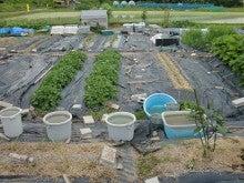 170626ウッチー式・今日の農作業の出来栄え03