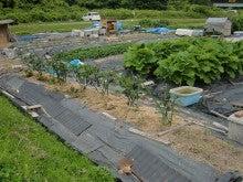 170627ウッチー式・今日の農作業の出来栄え08
