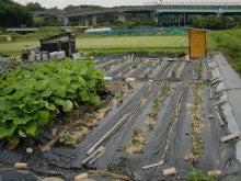 170627ウッチー式・今日の農作業の出来栄え07