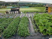 170627ウッチー式・今日の農作業の出来栄え06