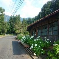 季節の花で和む 道端花園の記事に添付されている画像