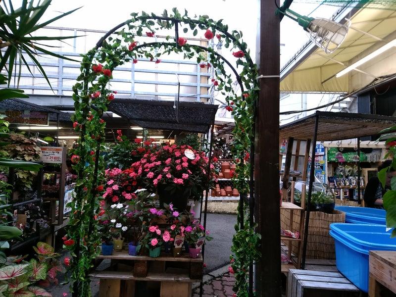 花売り場 Ⅴ