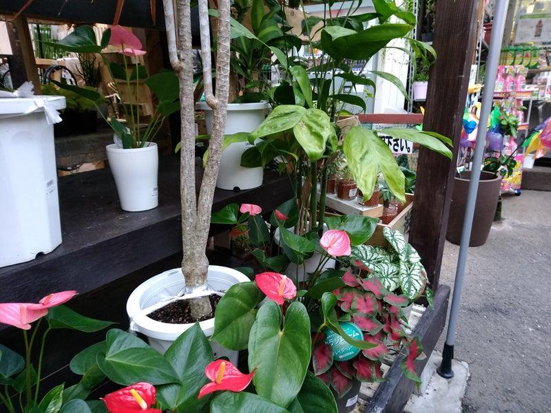 花売り場 Ⅱ