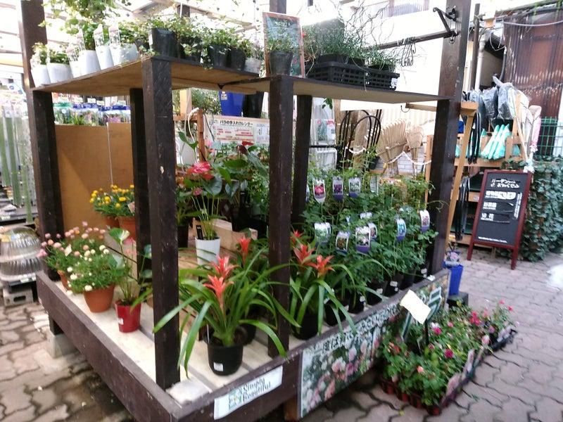 花売り場 Ⅳ