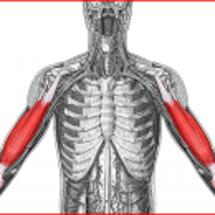 二の腕の筋肉の怪我か…