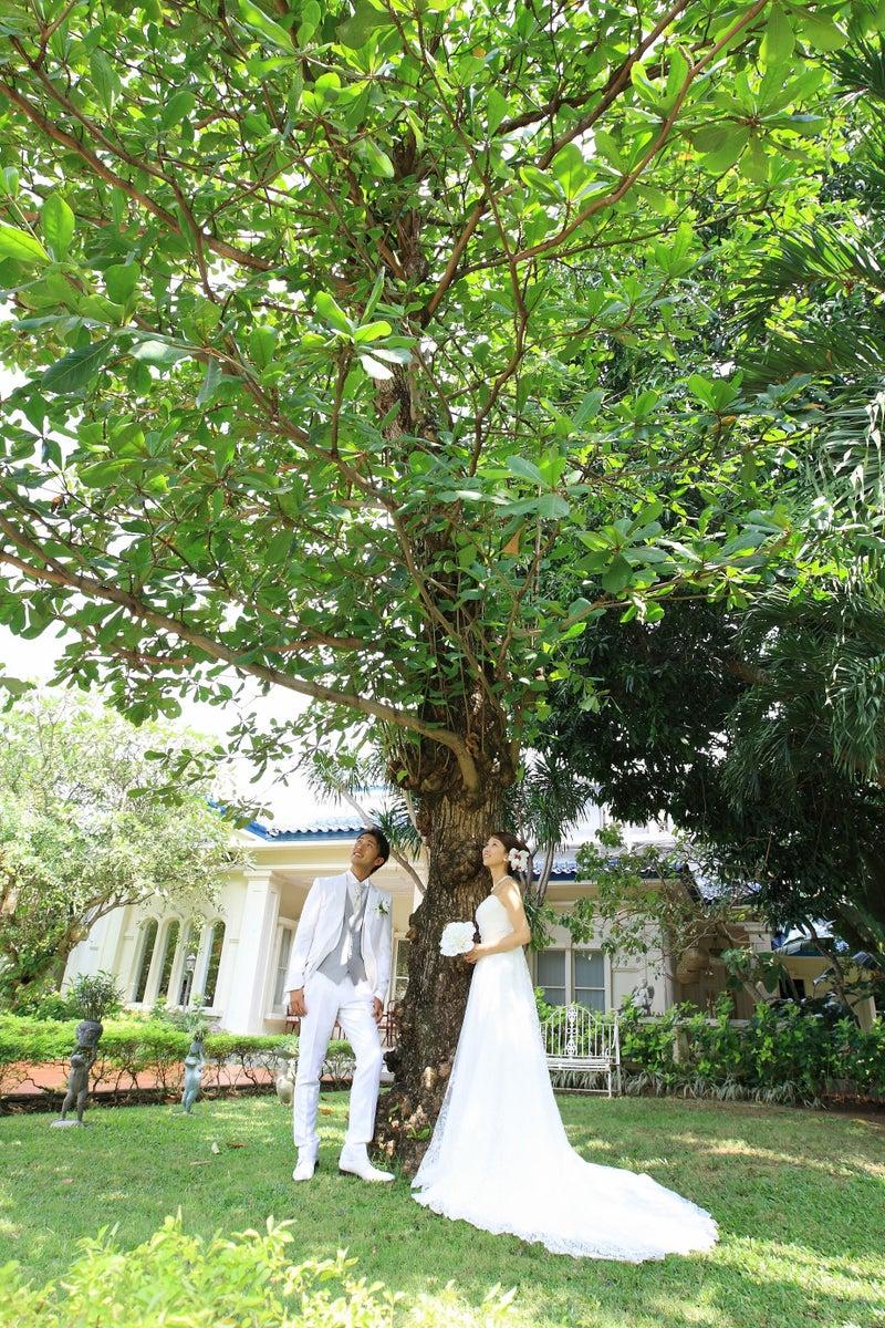 マンゴーの木の下