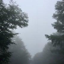 *雨。靄…白いです*