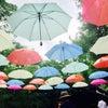 雨も楽しい!軽井沢ハルニレテラス「アンブレラスカイ」は7/10まで!の画像