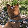 中国の医大生が実習で使用した犬を屋上で放置死させたの画像