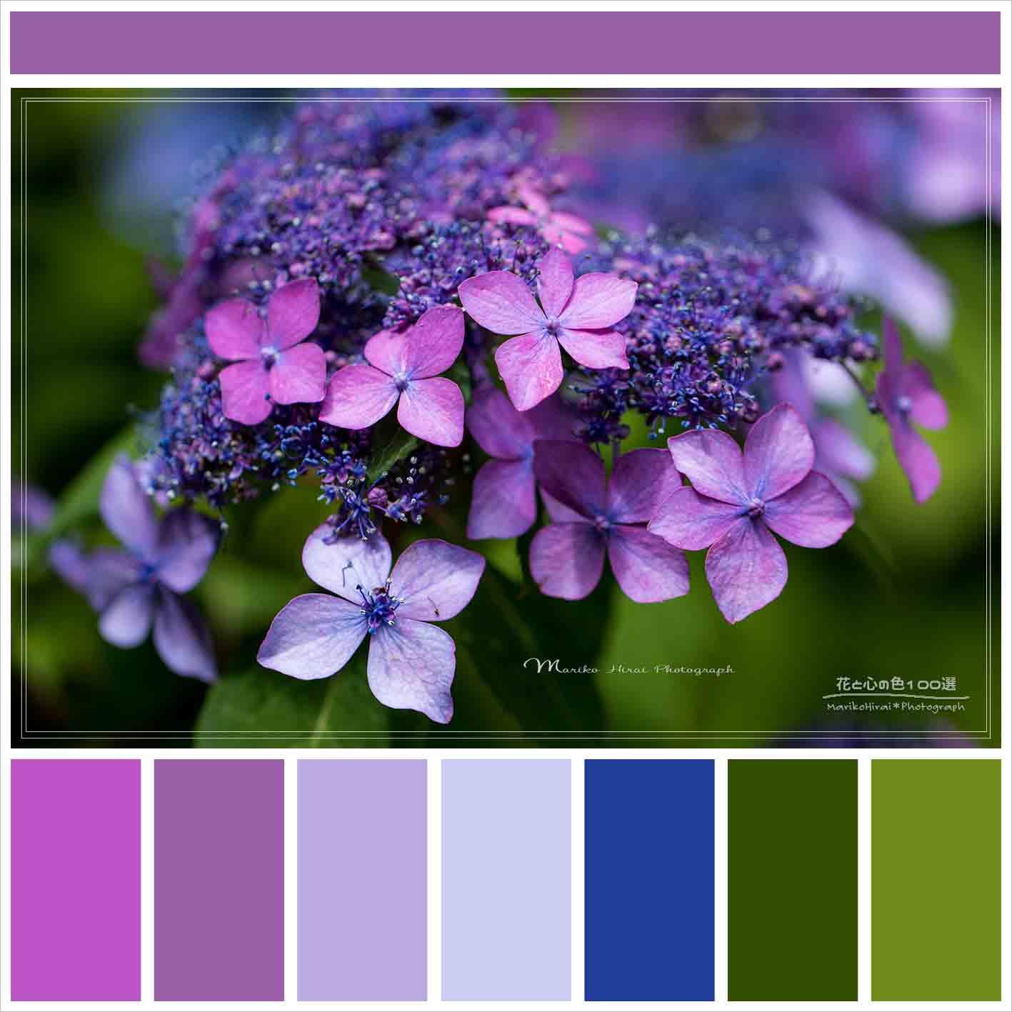 花と心の色アイコン用