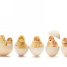 卵が先かニワトリが先…