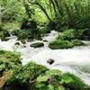 奥入瀬渓谷の画像