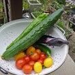 庭の様子~ト夏野菜で…