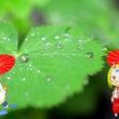 梅雨の季節でござる!…