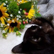 亡くなった猫が教えて…