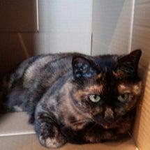 我が家の猫グッズ 3…