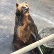熊でさえ、こうやって…