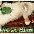 猫音シェル爺お誕生日…