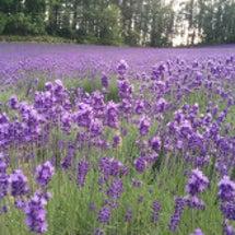 ☆濃紫早咲満開☆