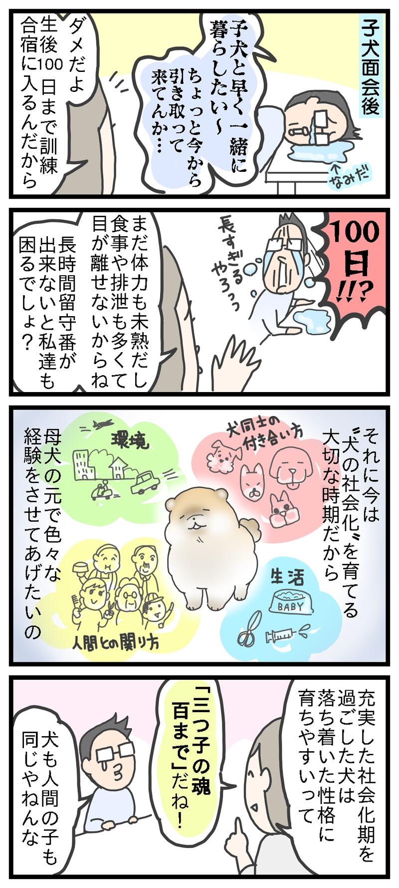 犬の社会化   ここんち!~ほの...