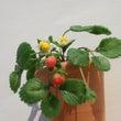 ミニチュアイチゴの植…