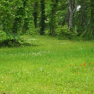森の庭の画像