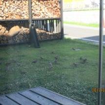 庭に鳥が!鳥が!