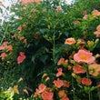 空に向かって咲く花た…