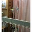 チビの入院