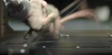 ネズミを襲撃