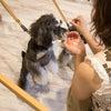 募集終了:【11月大阪】犬ごはん教室のアシスタントを探しています♡の画像