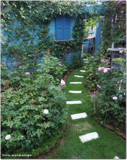 バラの庭 芝生管理