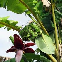 バナナの花って…