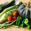 旬の 無農薬野菜  時短料理の画像