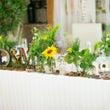 向日葵で夏の高砂コー…