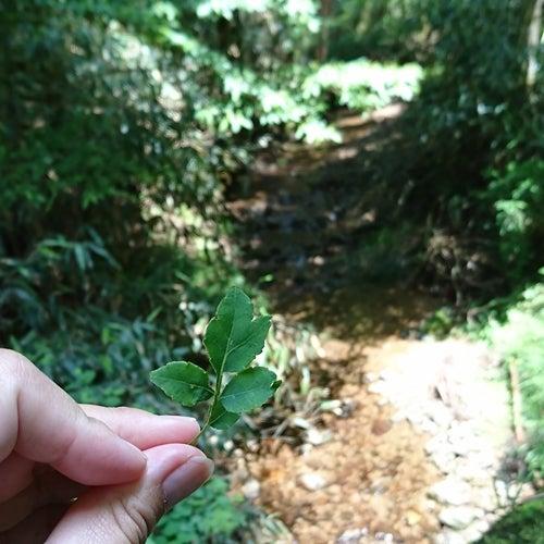 高野山森林セラピー